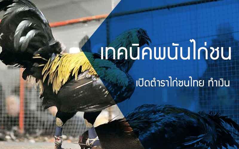 เปิดตำราไก่ชนไทย